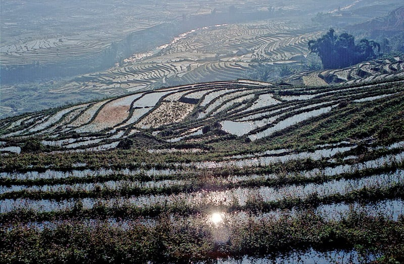 rice terraces of sapa vietnam