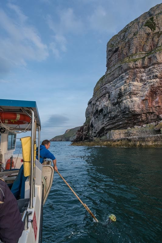 what to do in wales lobster safari