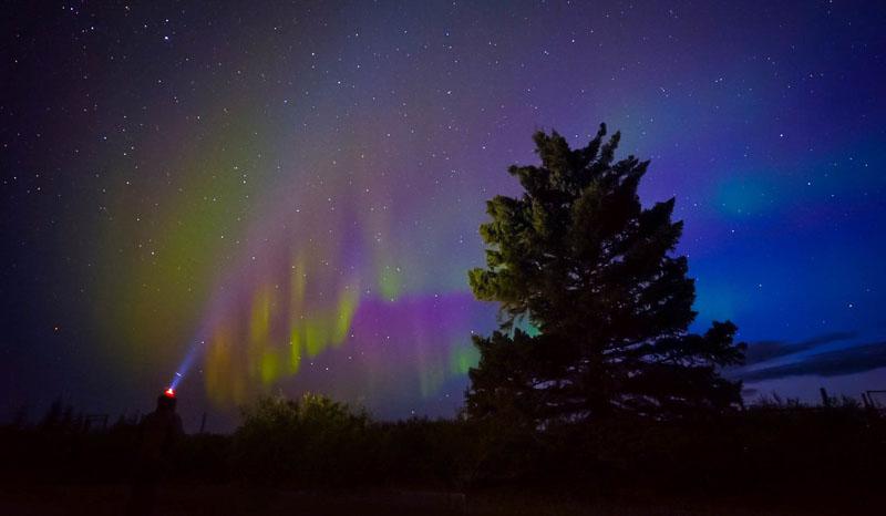 polar bear photos northern lights