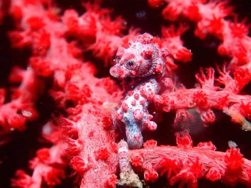 Diving Sabah beyond sipidan