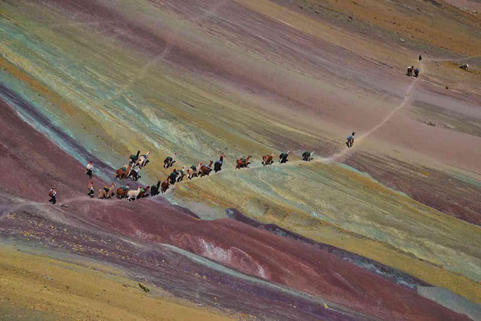 Alpacas and horses going Vinicunca, Winikunka - Montaña de Siete Colores