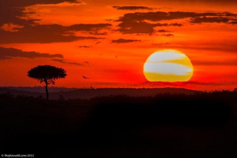 visit africa masai mara