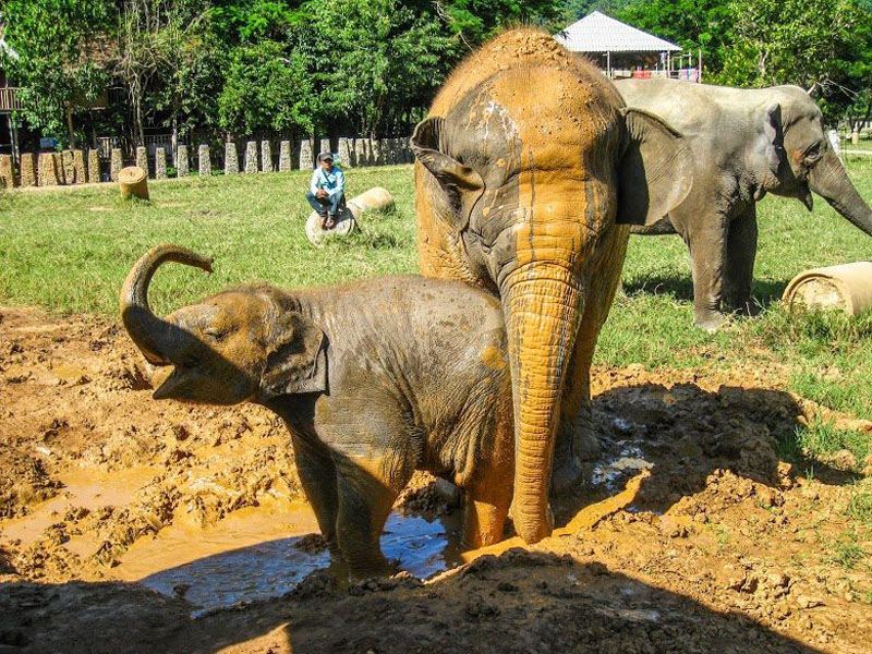 elephants playing thailand