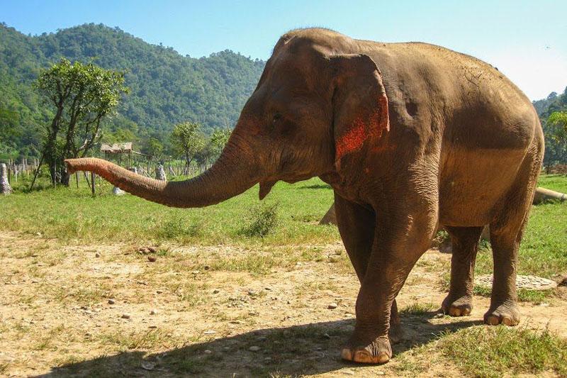 responsible tourism thailand santucary