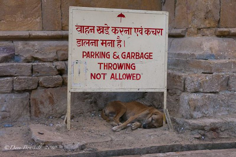 ruin sleep in india dogs