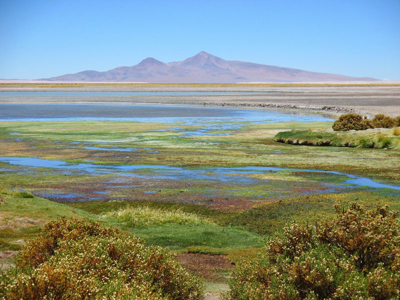 Salar de Tara an Extraordinary Trip in the Atacama Desert
