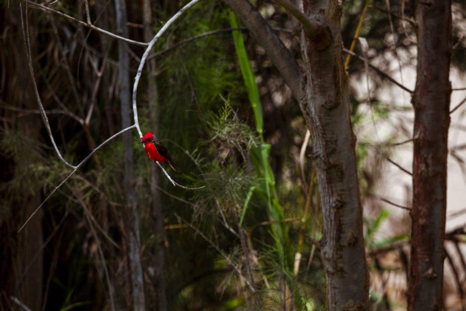 peru birds at oasis