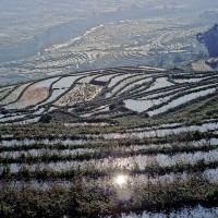 sapa-vietnam-rice-terrace-sites.jpg