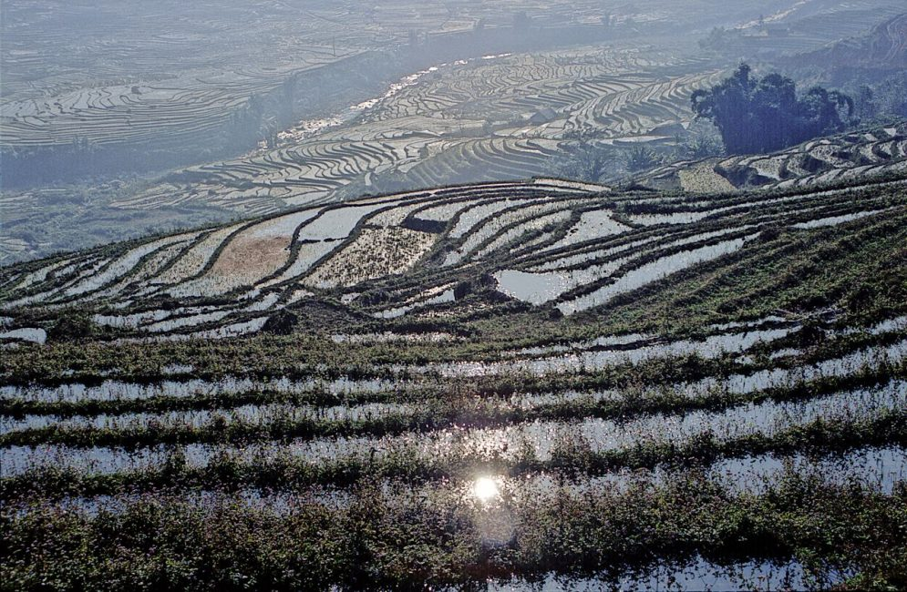 Rice Terrace Sapa Site to See in Vietnam