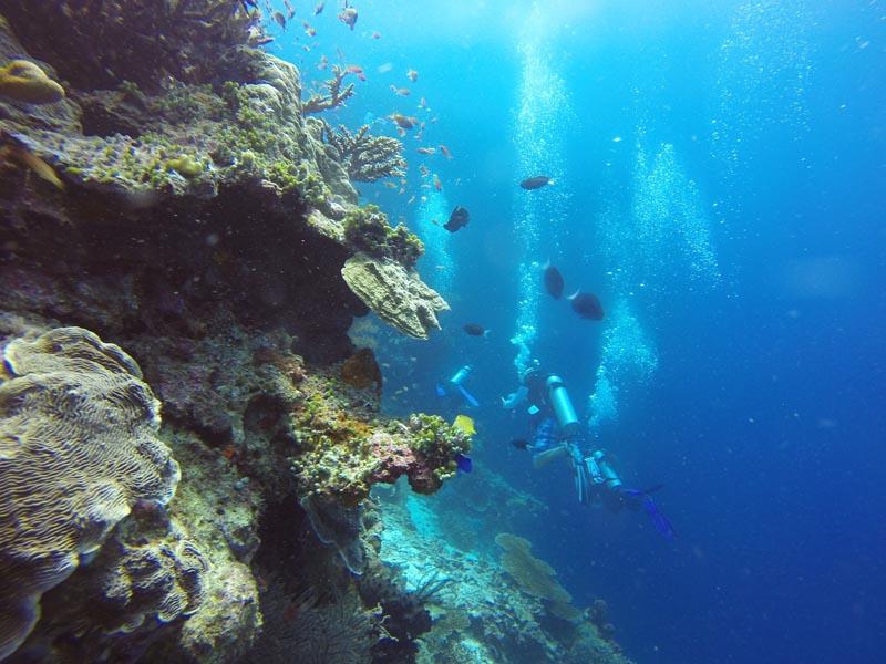 borneo scuba diving