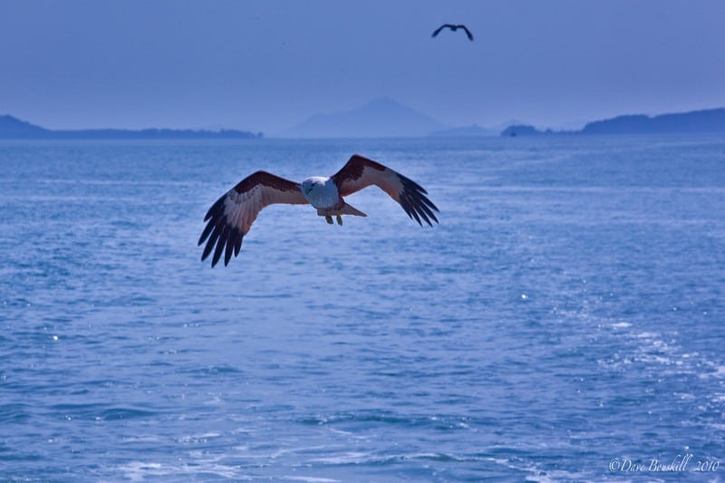 sea canoe Thailand - sea eagle