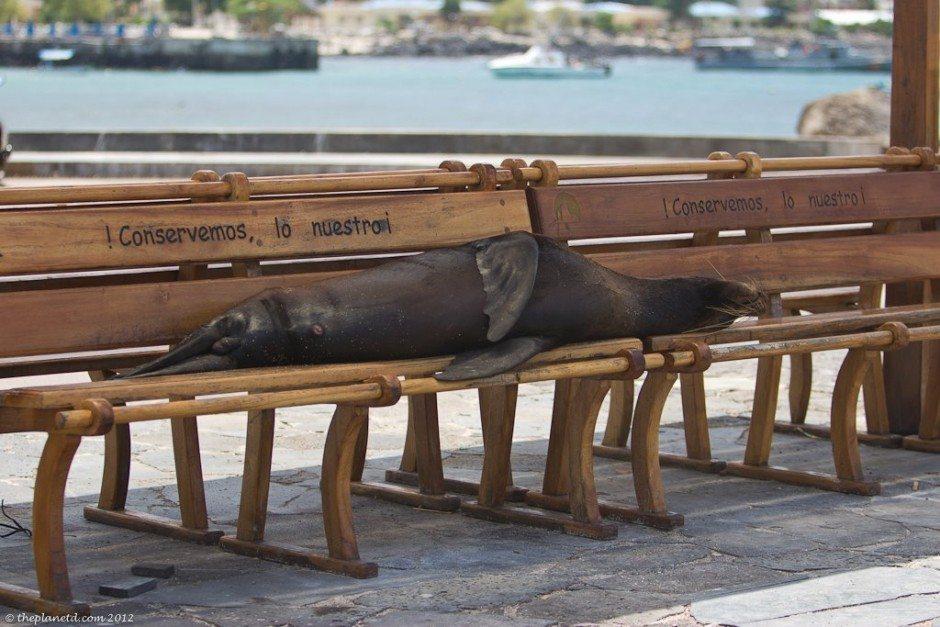 sea lions galapagos