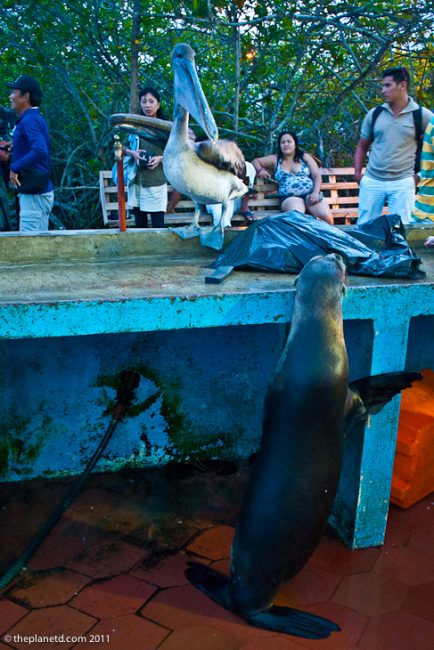 sea lions galapagos-1