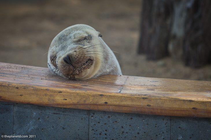 sea lions galapagos-3