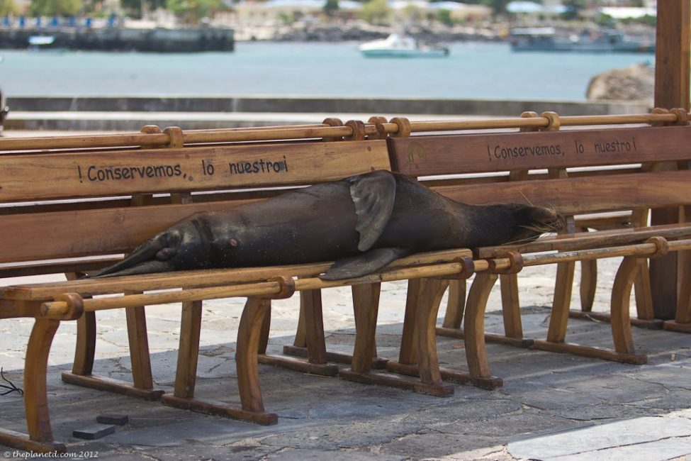Playing With Sea Lions in the Galapagos