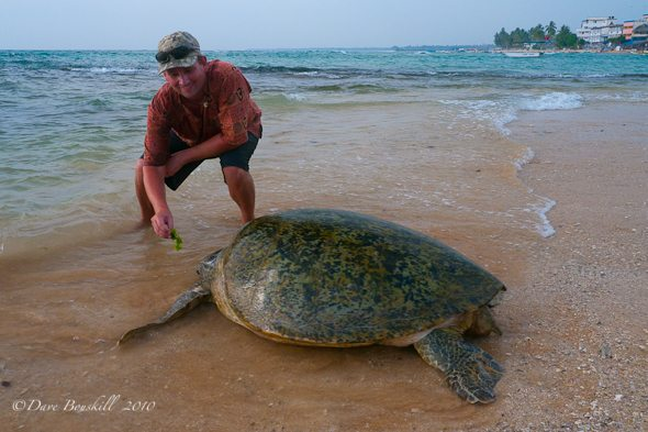 Dave with Sea Turtle in Hikkaduwa Sri Lanka