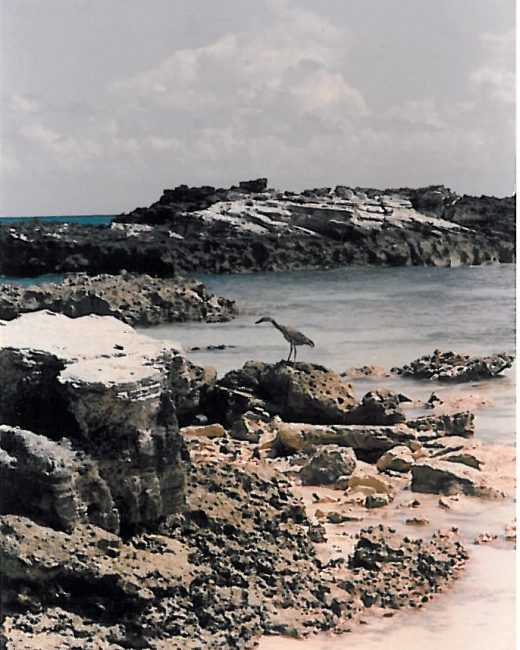 seabird-bahamas