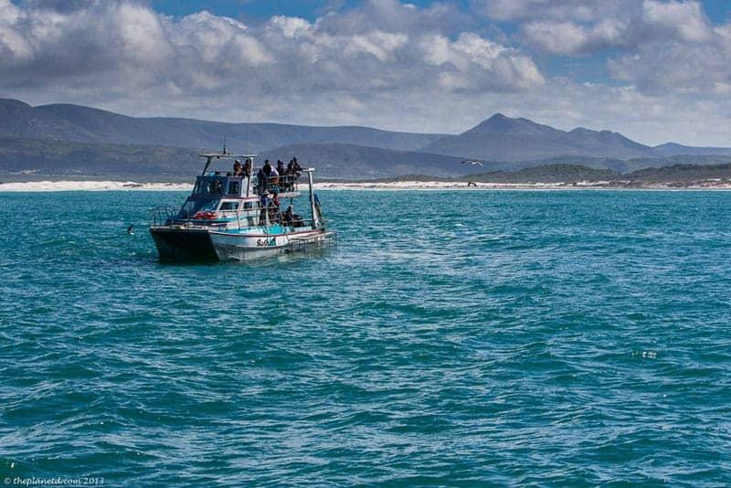 shark diving boat