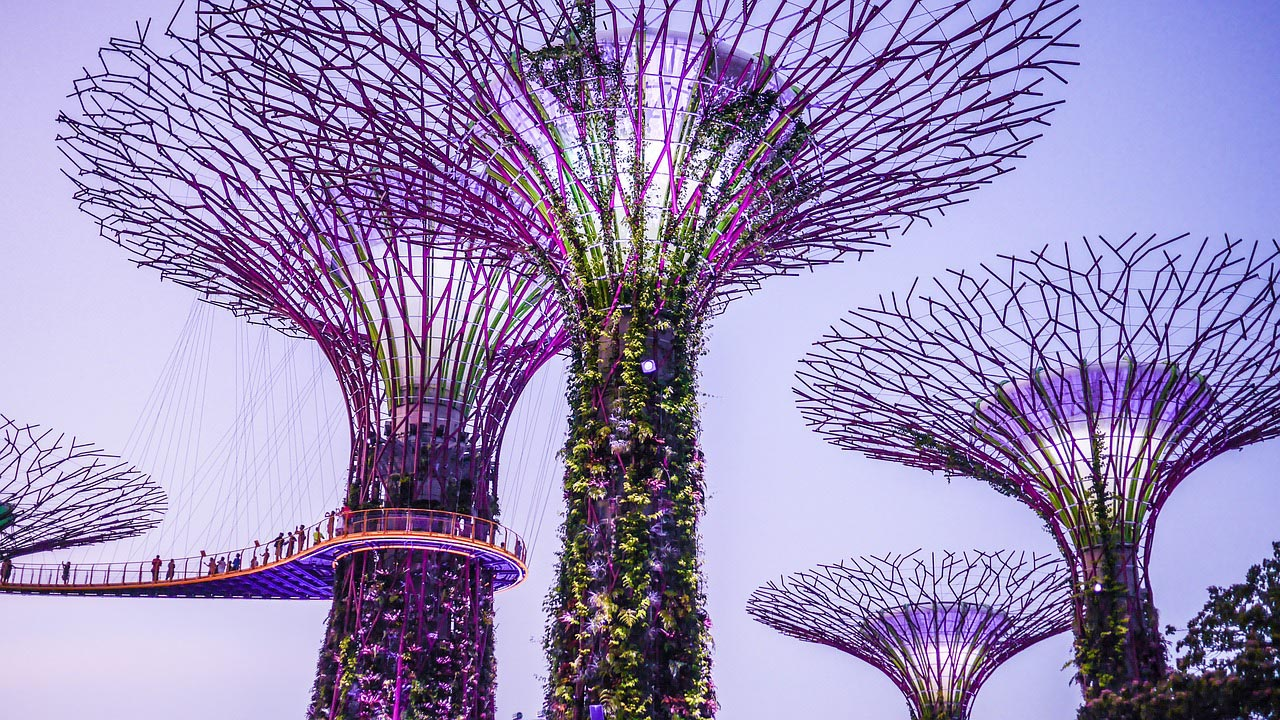 Super Tree Structures in Singapore