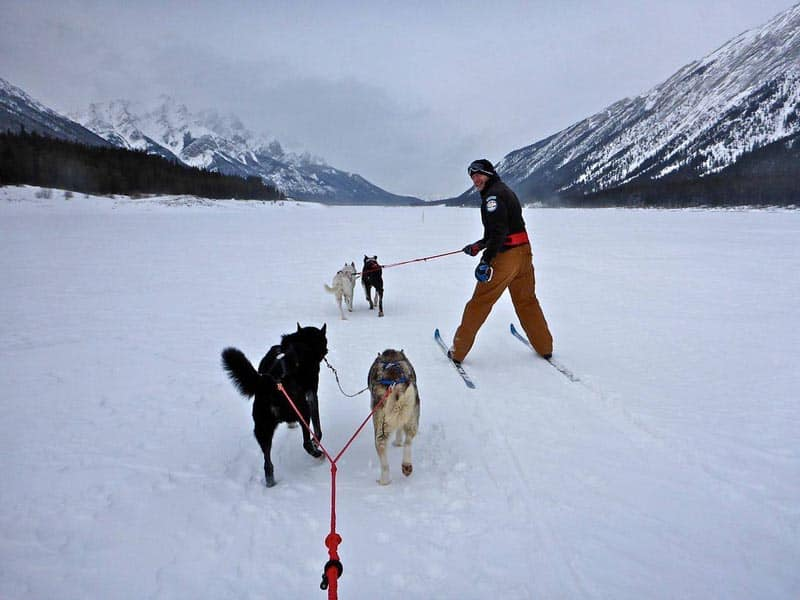 things to do in Alberta skijoring