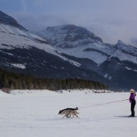 What the heck is Skijoring?