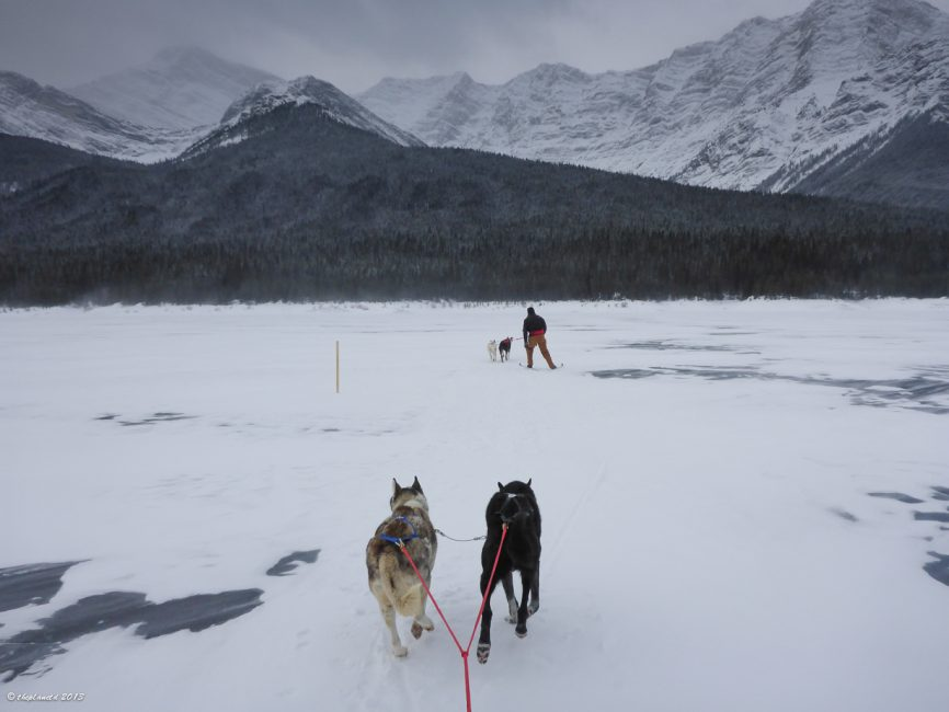 Skijoring in the Canadian Rockies!