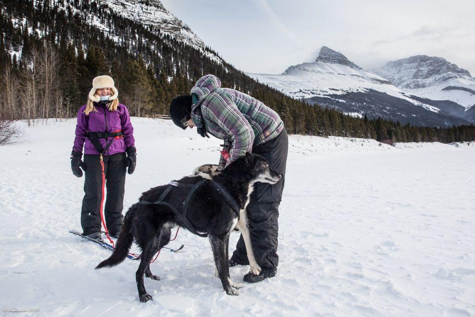 Pro-skijoring-alberta
