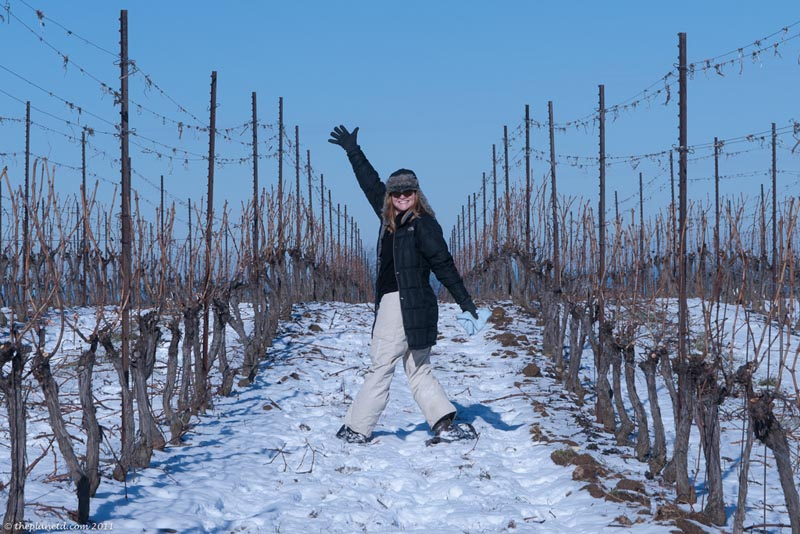 deb snowshoeing in the Thirty Bench vineyard