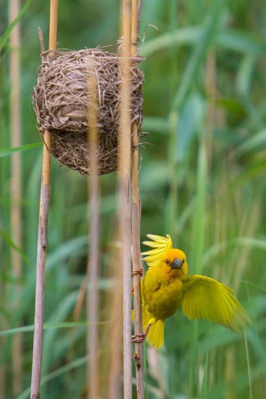 south africa photos bird