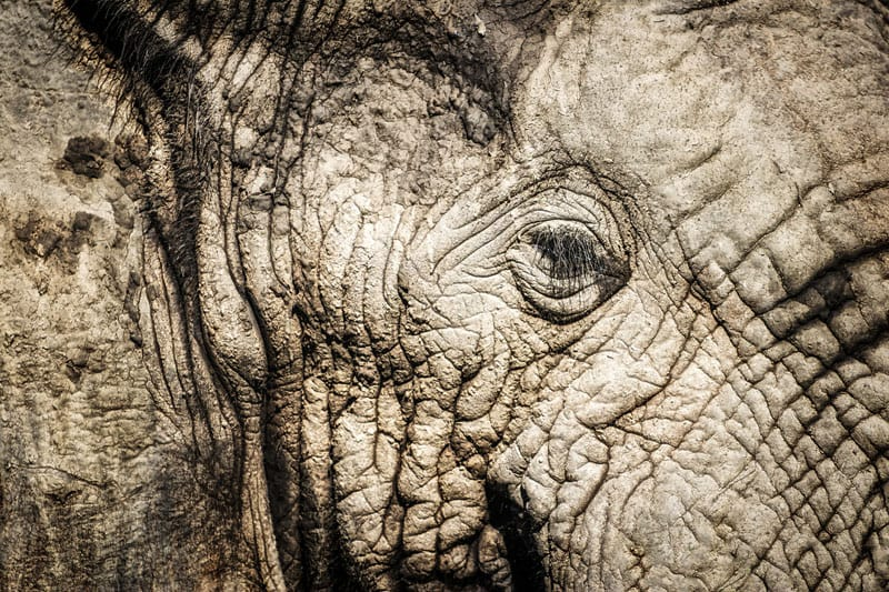 south africa photos elephant