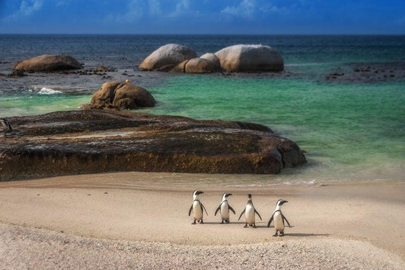 south africa photos penguins