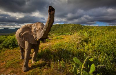 south africa wildlife elephant trunk