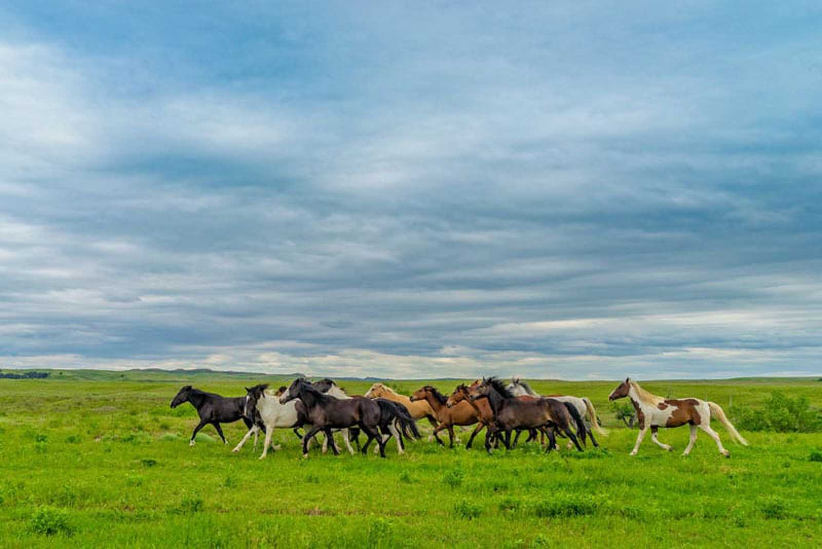 south dakota attractions mustangs