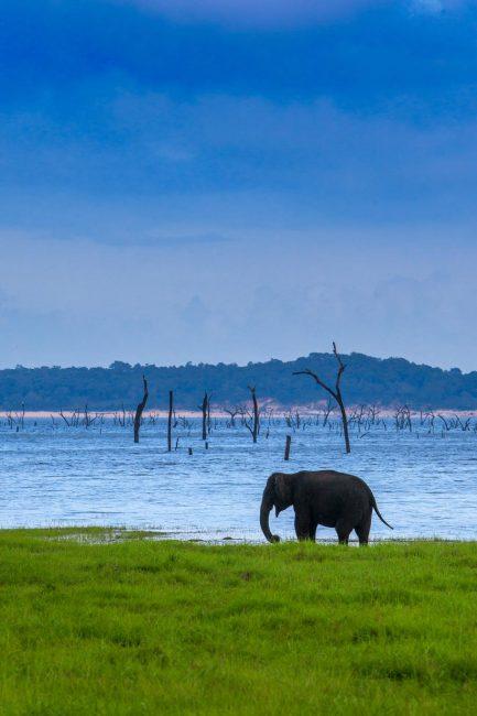 sri lanka photos lone elephant
