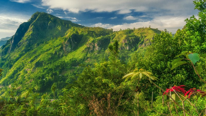 sri lanka photos jungle