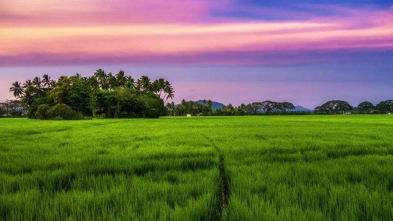 sri lanka photos pink sunset