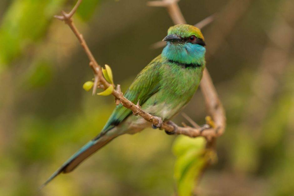 sri lanka bird watching