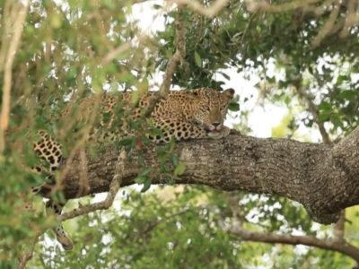 Sri Lanka Safari – The Best of Yala National Park