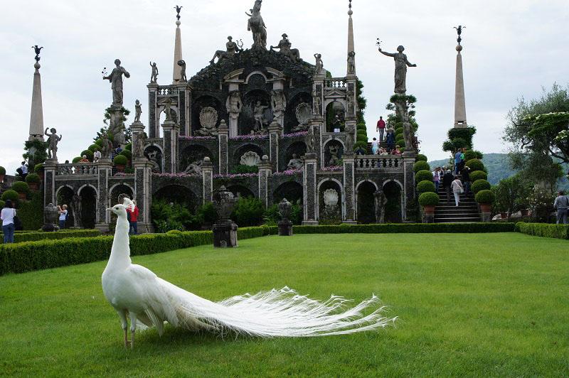 isola bella bird