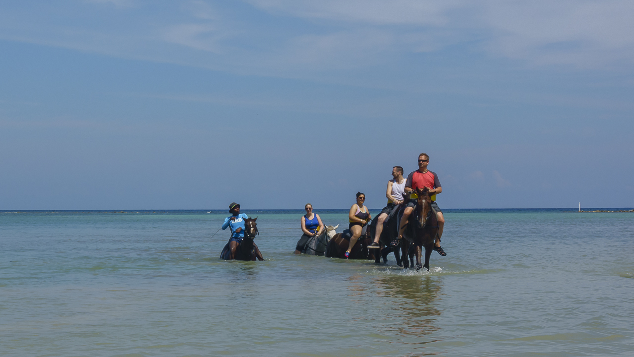 swimming with horses the ride