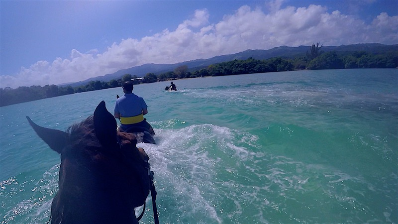 horses swimming in jamaica