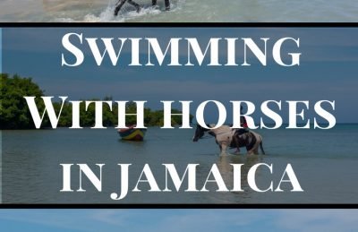swimming with horses pin