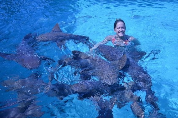 swimming with nurse sharks in the exumas