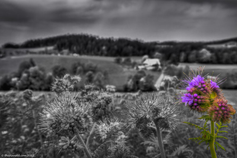 switzerland pictures flowers