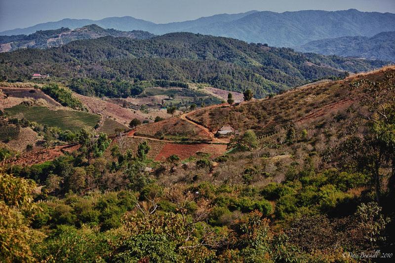 tea terraces hills
