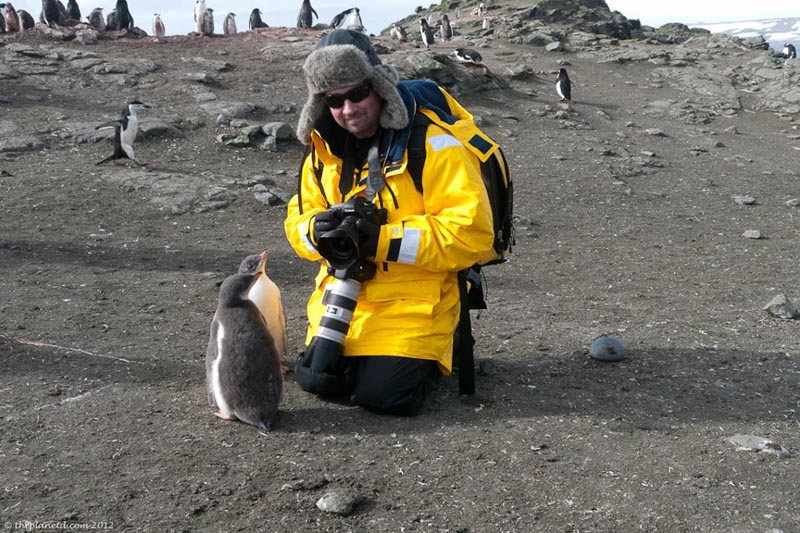 things to do in Antarctica meet the penguins