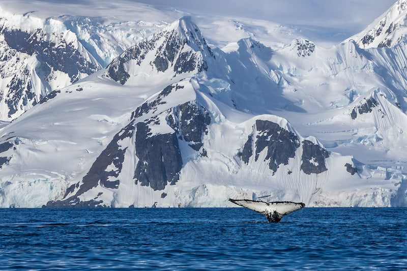 things to do in Antartica whale