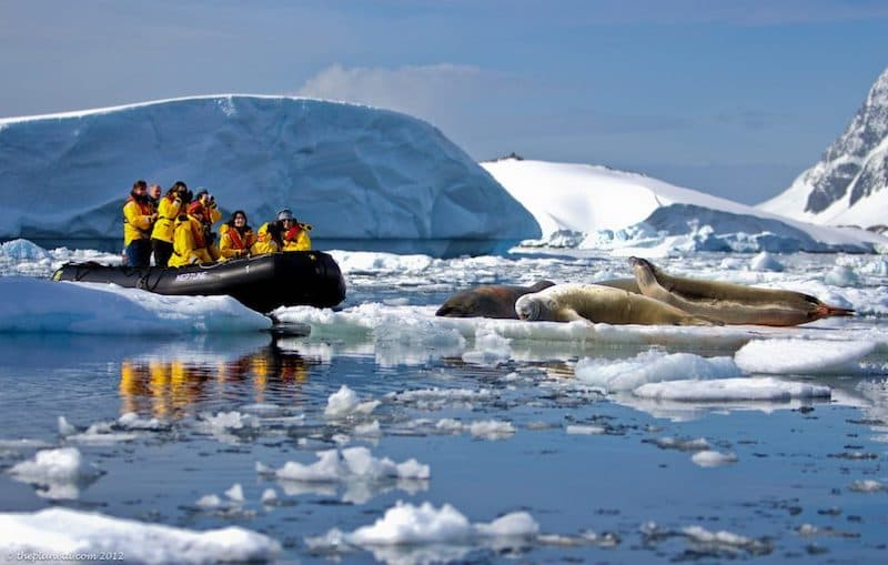 things to do in Antartica zodiac tours