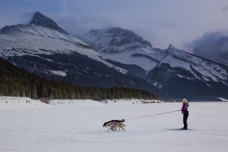 alberta travel tips skijorring with two dogs