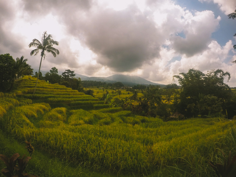 jatiluwih rice terraces is one of the top bali places to visit